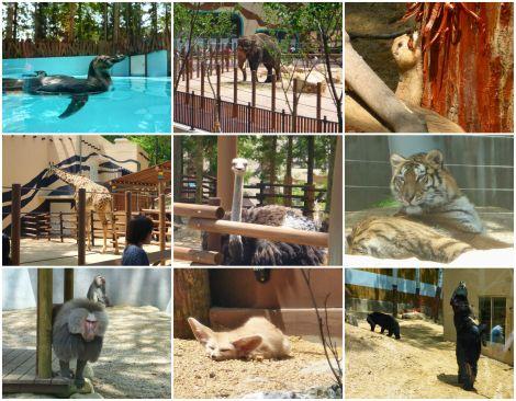 AnimalsatBusanZoo.jpg